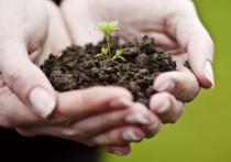 В Пермском государственном аграрно-технологическом университете начались бесплатные лекции для садоводов-любителей