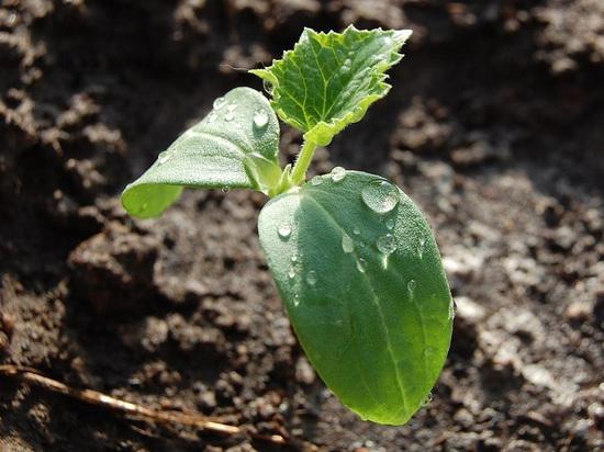 Прикамские садоводы начали готовиться к новому сезону