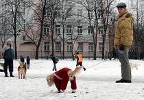 В Москве могут ввести генотипическую регистрацию домашних животных